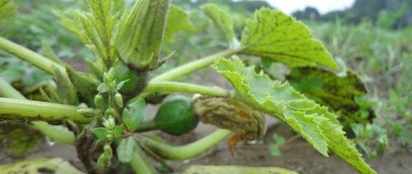 onze eerste groenten!