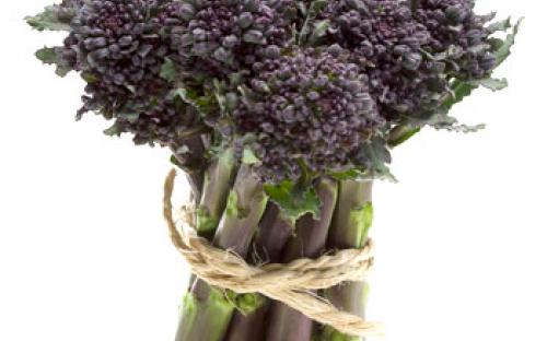 purple-sprouting-broccoli-bunch